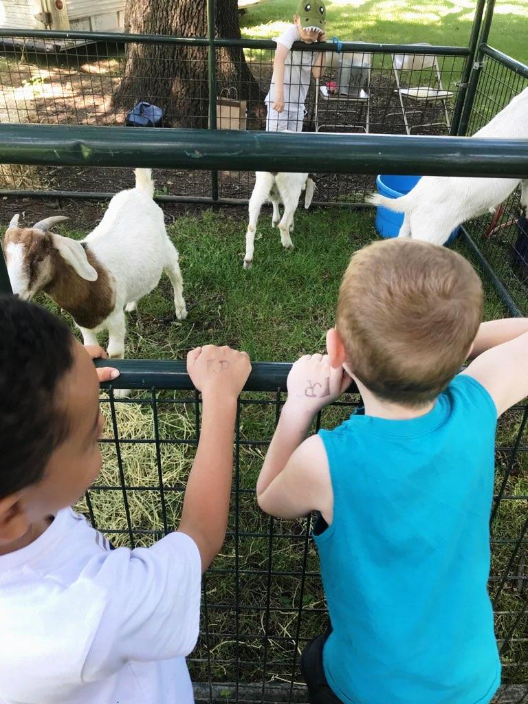 Fairmont students visiting goats at Peña Adobe Park.         Courtesy Photo